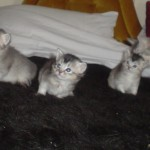 Polly's Second Litter 01