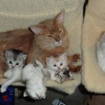 Ruslan with Kittens